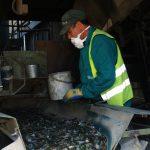 El MITECO destina dos millones a fomentar el empleo verde