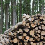 El proyecto BIO3 propone el uso de biomasa para eliminar contaminantes del agua