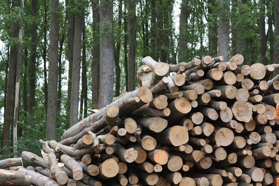 Proponen aprovechar biomasa como los residuos forestales para obtener bioproductos con los que depurar aguas residuales