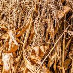 Desarrollan un nuevo proceso que abarata la producción de biocombustibles a partir de residuos vegetales