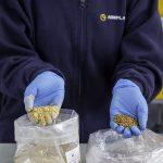 Nuevos envases más sostenibles a partir de huesos de aceituna