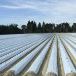 Un nuevo 'punto verde' para la gestión de residuos plásticos agrícolas
