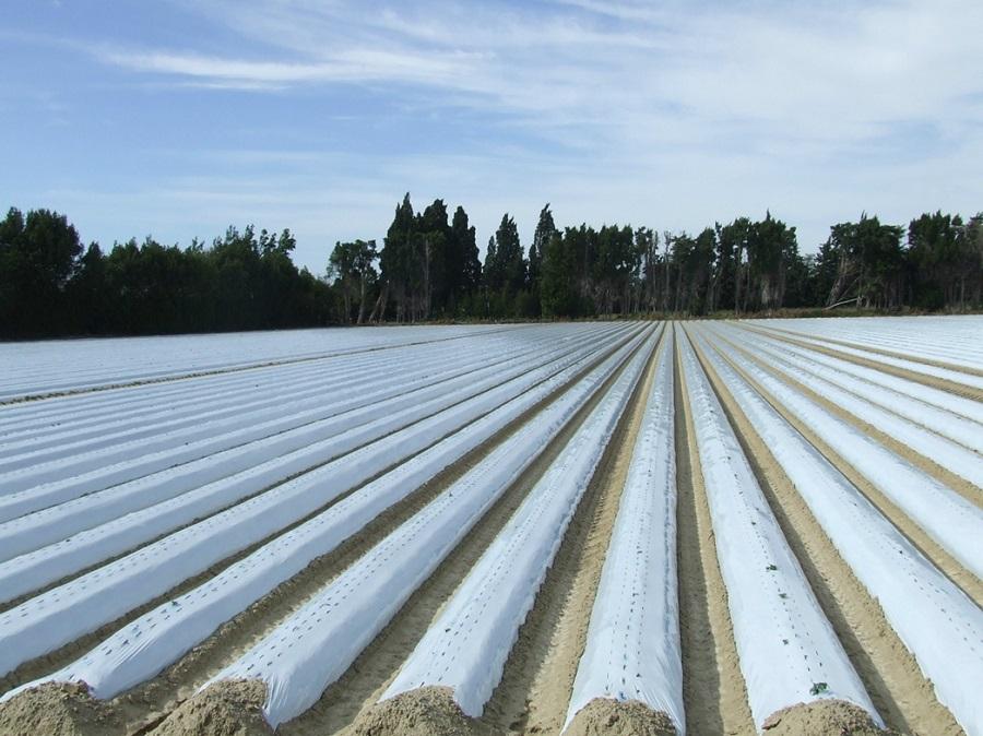 MAPLA, nueva asociación para la gestión de residuos plásticos agrícolas