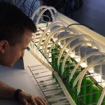 Obtienen un potente fertilizante a partir de una microalga cultivada en aguas residuales de la industria cervecera