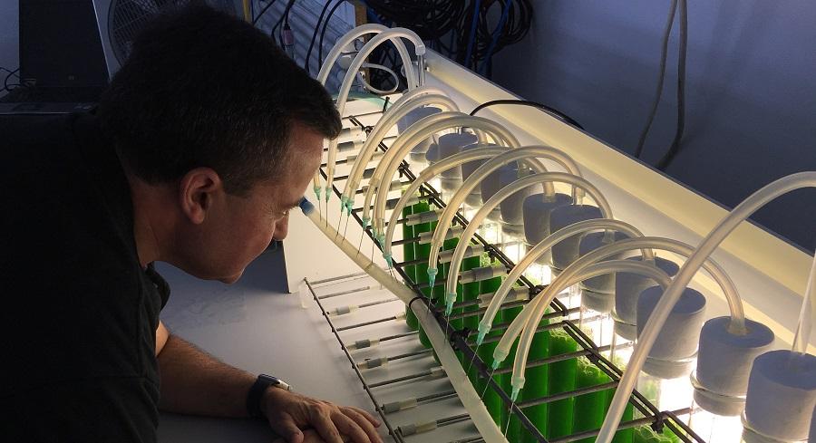 Obtienen fertilizantes con microalgas cultivadas en aguas residuales