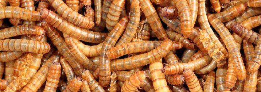 Insectos y microorganismos para biodegradar plásticos agrícolas