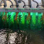 Investigadores españoles desarrollan un método de alerta del coronavirus mediante el análisis de aguas residuales