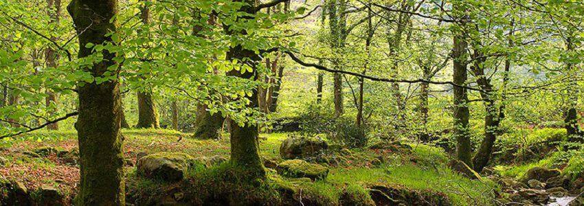 Cantabria convoca ayudas para impulsar el uso de biomasa forestal residual
