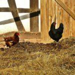 Obtienen un compost de calidad combinando estiércol de pollo y residuos agrícolas