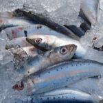 Hasta el 60% de las sardinas y anchoas del Mediterráneo occidental tienen microplásticos en sus intestinos