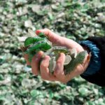La cadena de valor del vidrio europea se marca un objetivo de reciclado del 90% en 2030