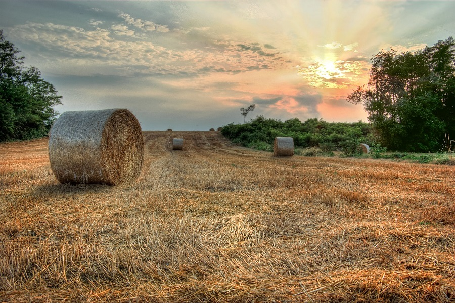 Proyecto para la valorización de residuos agrarios en Asturias