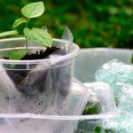 Primeros resultados del proyecto BIOnTop para el desarrollo de nuevos envases reciclables y compostables