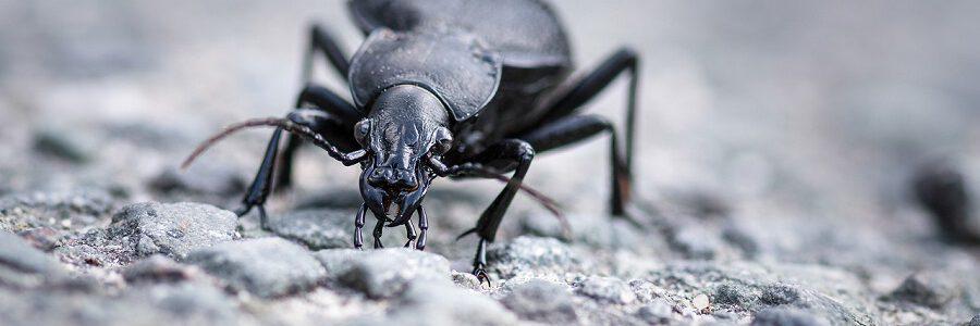 Insectos para degradar y valorizar plásticos agrícolas