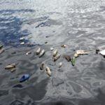 Una investigación estima que la presencia de residuos plásticos en los mares se multiplicará por seis en los próximos diez años