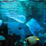 Desarrollan una guía para clasificar los plásticos oceánicos por su color