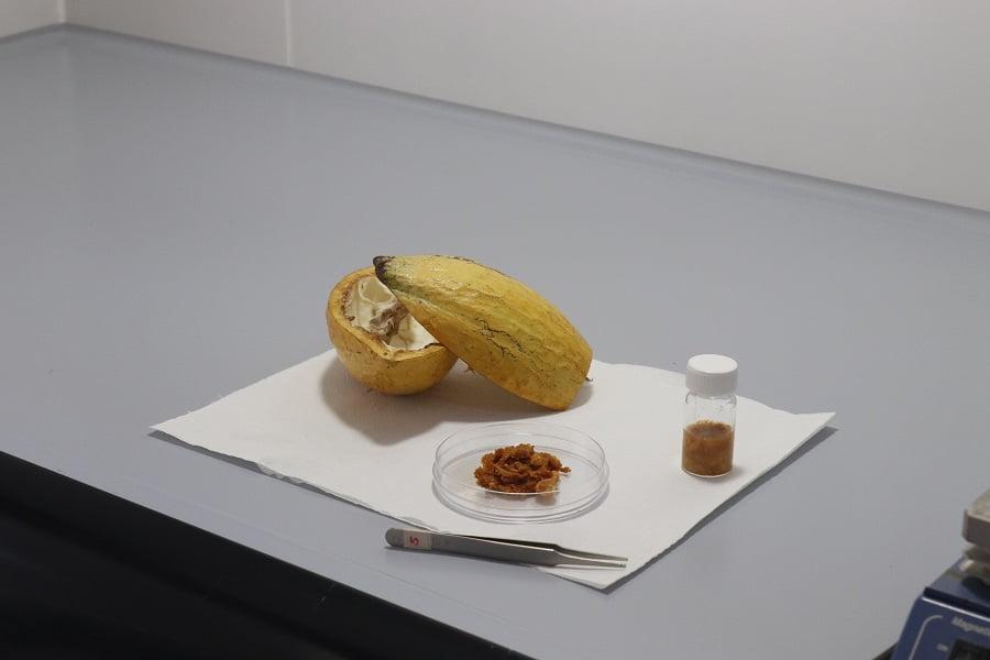 bioplástico a partir de residuos de cacao y algodón