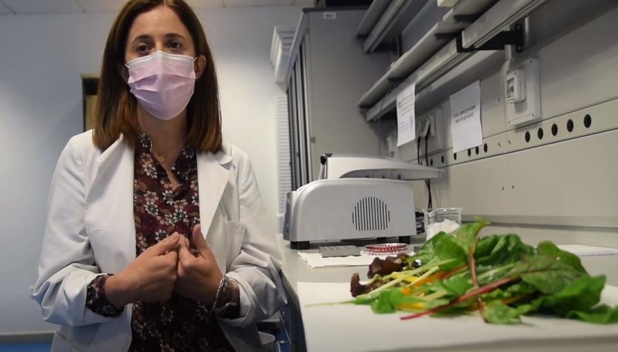 Demuestran que el compost de residuoso orgánicos mejora la calidad de productos agrícolas
