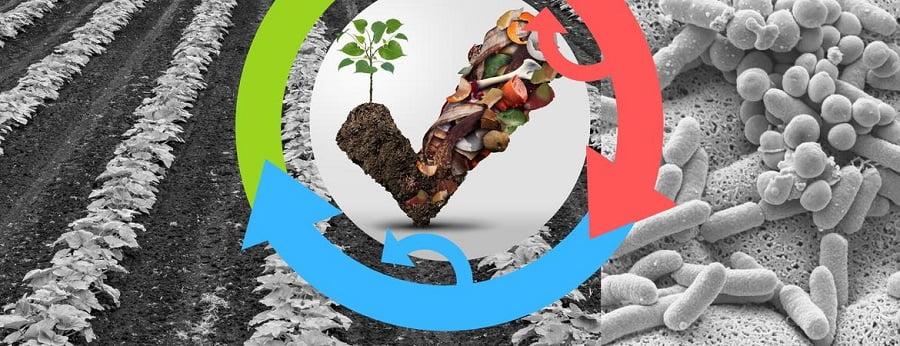 Proponen aprovechar el desperdicio alimentario en la producción de nuevos alimentos