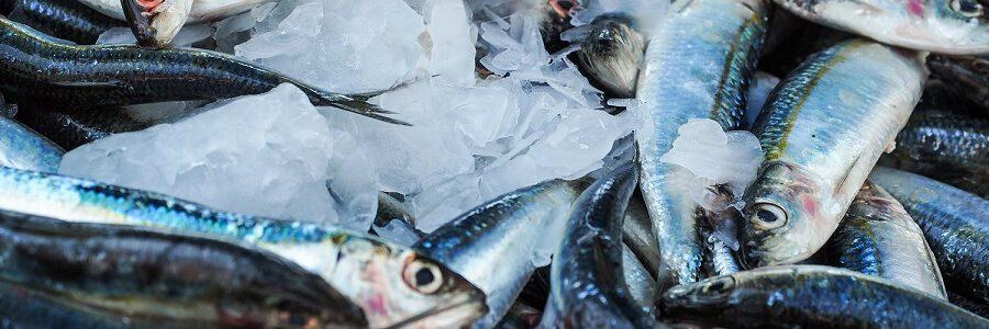 Neiker coordina un proyecto europeo para convertir toneladas de residuos de la industria pesquera en biofertilizantes