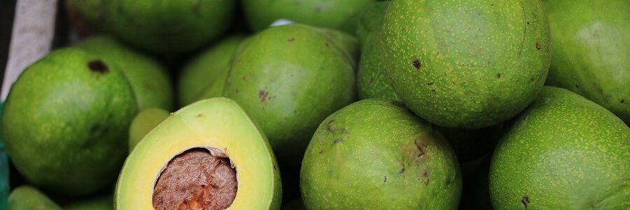 El proyecto GUACAPACK desarrollará un envase biodegradable a partir de residuos de aguacate