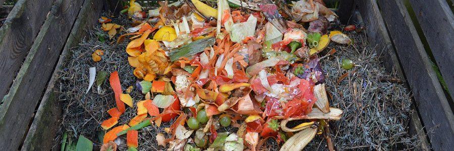 Investigadores españoles identifican todas las bacterias y hongos que intervienen en los procesos de compostaje