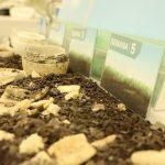 ITENE obtiene la certificación de DIN CERTCO para realizar ensayos de compostabilidad doméstica