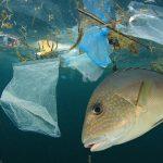 El Parlamento Europeo reclama medidas drásticas contra la basura marina