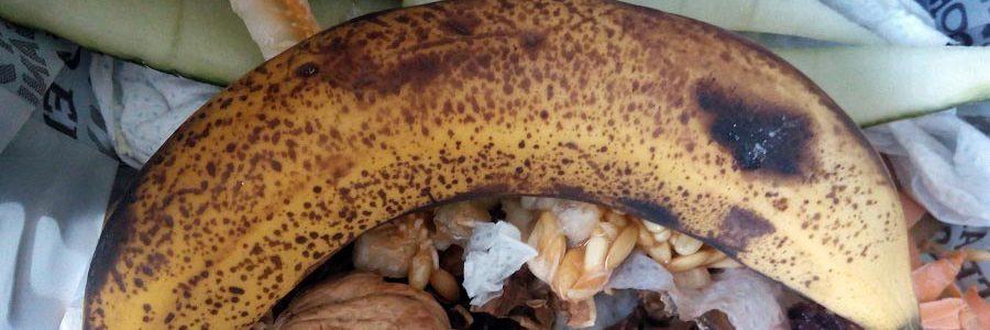 Casi mil millones de toneladas de alimentos se desperdician cada año en todo el mundo