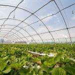 Cirplas Agroplásticos será la nueva entidad para la gestión y el reciclaje de plásticos agrícolas
