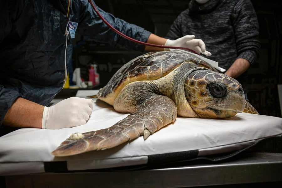 Los residuos plásticos ponen en peligro a las tortugas marinas del Mar Adriático