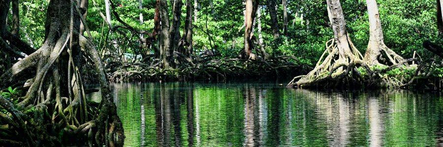 Los manglares y las praderas marinas absorben los microplásticos