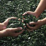 «Las definiciones sobre reciclaje de plásticos no deben ser establecidas por la industria»