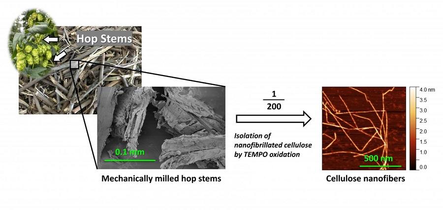 Nanofibras de celulosa a partir de residuos de lúpulo de la industria cervecera