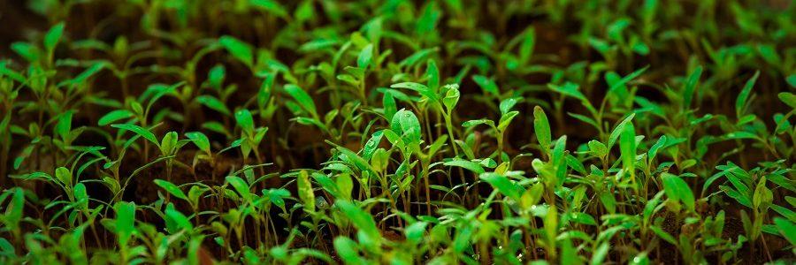 Nuevos fertilizantes y bioestimulantes mediante la combinación de residuos orgánicos y microalgas