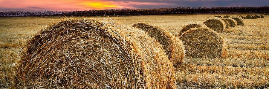 Essity comienza a fabricar papel tisú a partir de paja de trigo