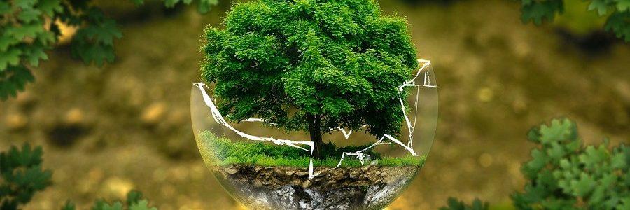 La Fundación Biodiversidad destinará 88,75 millones a proyectos que impulsen la recuperación verde